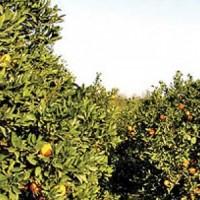بررسی نحوه بیمه باغات