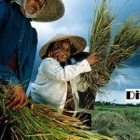توسعه روستایی و کارآفرینی روستایی در چین